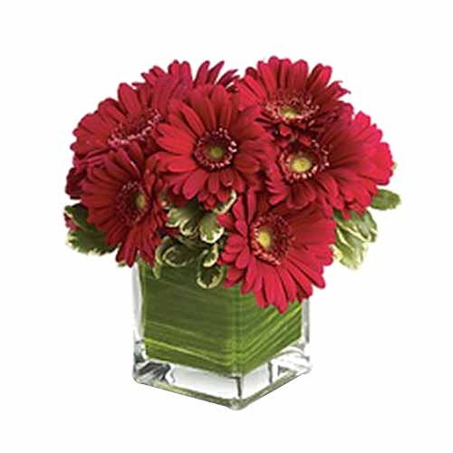 Sensational Arrangement of Red Gerberas on the Occasion of Valentines Day