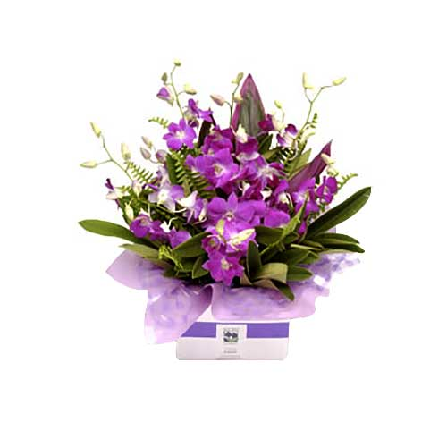 Premium Purple Floral Pleasure