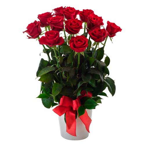 Fashionable 12 Red Roses in a Pot