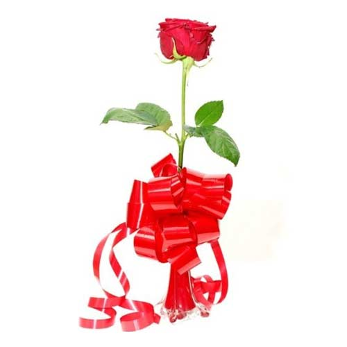 Dazzling Arrangement of Single Red Roses in a Vase on the occasion of Valentines Day